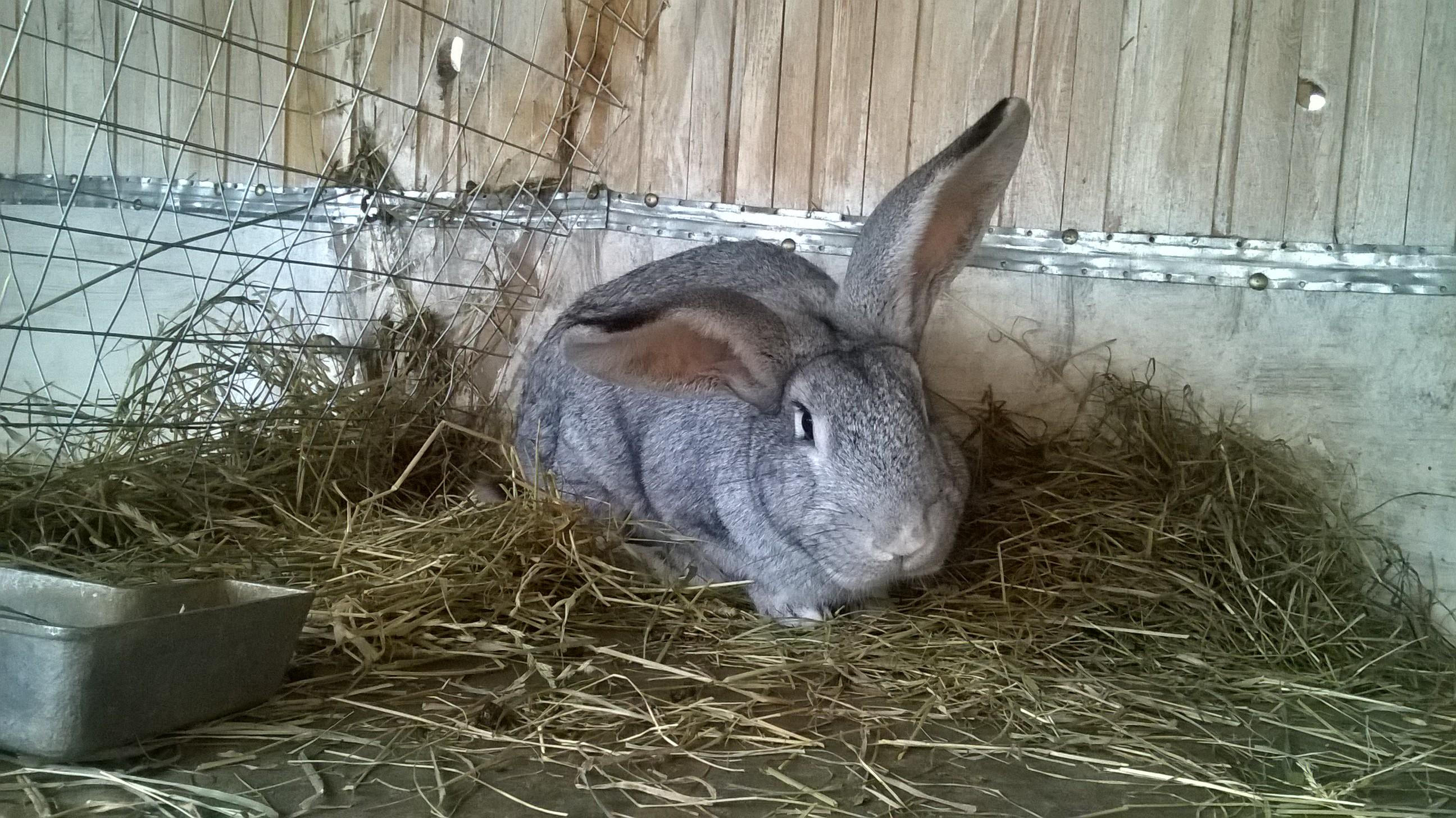 мясо кролика цена  за 1 кг