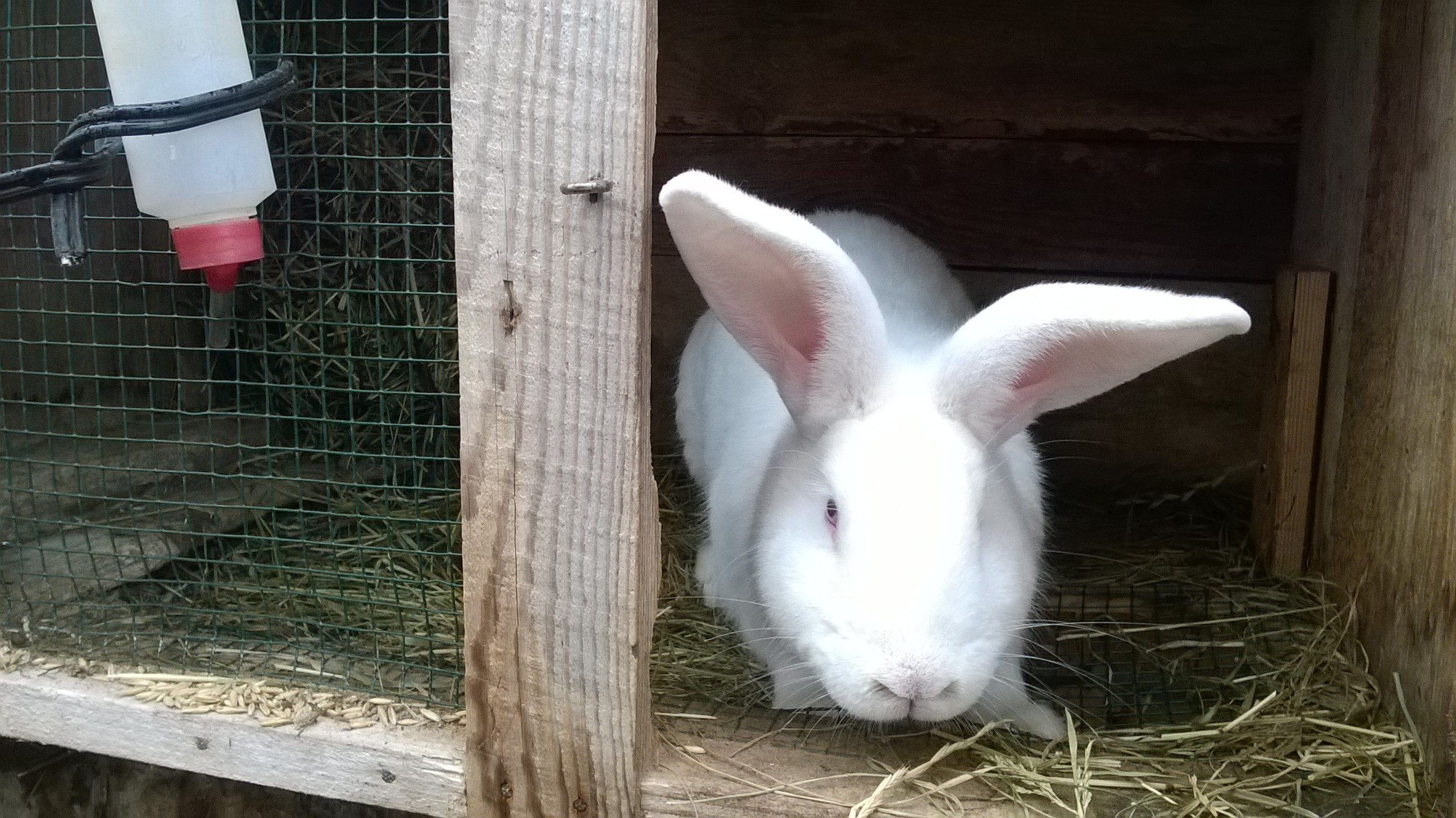 Выращивание кроликов зимой 5