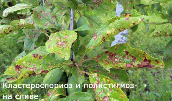 Медный купорос применение в садоводстве весной