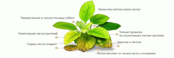 Что не хватает растениям