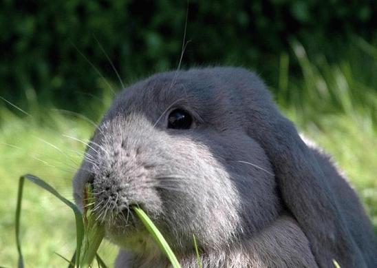 Гілки для кроликів